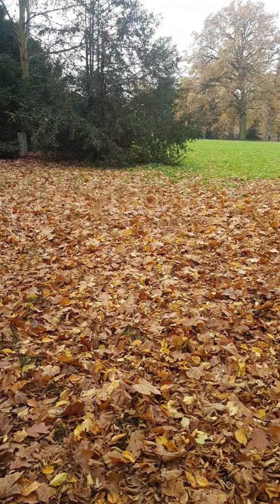 Idealne liście na kompost .